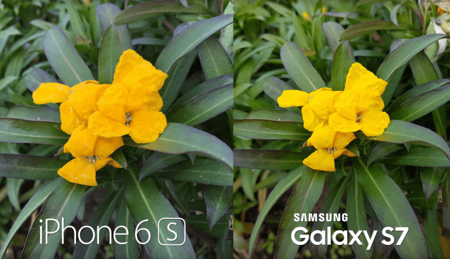 Galaxy-S7-vs-iPhone-6S-Plus-camera-test-640x368